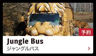 ジャングルバスの運行時間を確認する