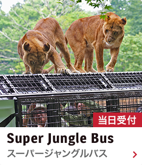 スーパージャングルバス