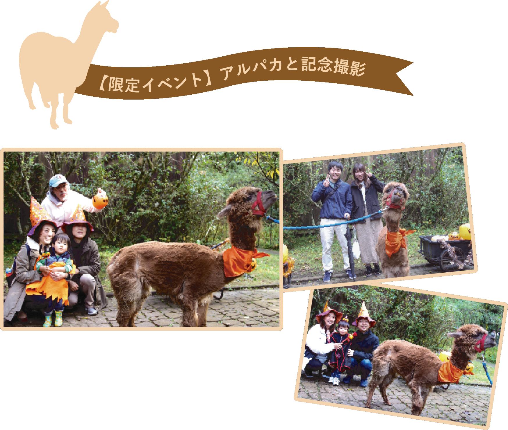 【限定イベント】アルパカと記念撮影