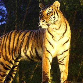 夜行性動物の活動的な姿が見たい