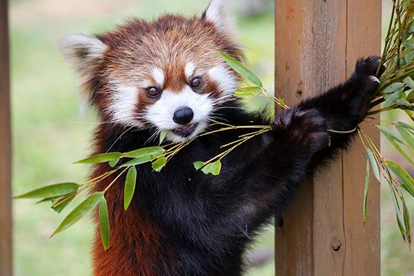 step4 動物たちが活発に行動している姿を観察しよう