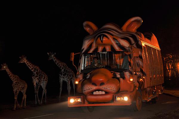 step3 ナイト動物バスでサファリゾーンへ出発!