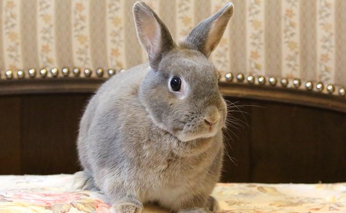 【ウサギの館】エサあげ体験