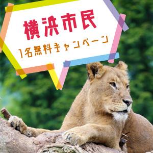 記事「横浜市民1名無料キャンペーン(6月1日から)」の画像