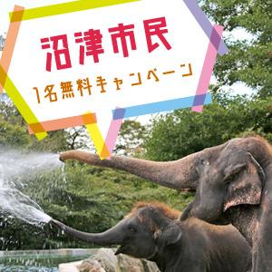 記事「沼津市民1名無料キャンペーン(7月1日から)」の画像