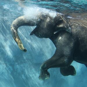 記事「「水中のゾウ」公開!9月末まで」の画像