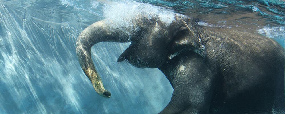 水中のゾウ」公開!9月末まで | ...
