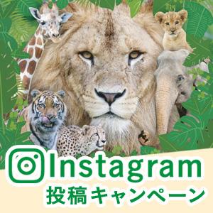 記事「Instagram投稿キャンペーン(7月21日から)」の画像