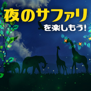 記事「【9月限定】夜のサファリを楽しもう!」の画像