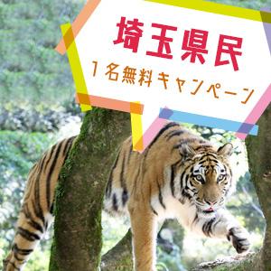 記事「埼玉県民1名無料キャンペーン(11月1日から)」の画像