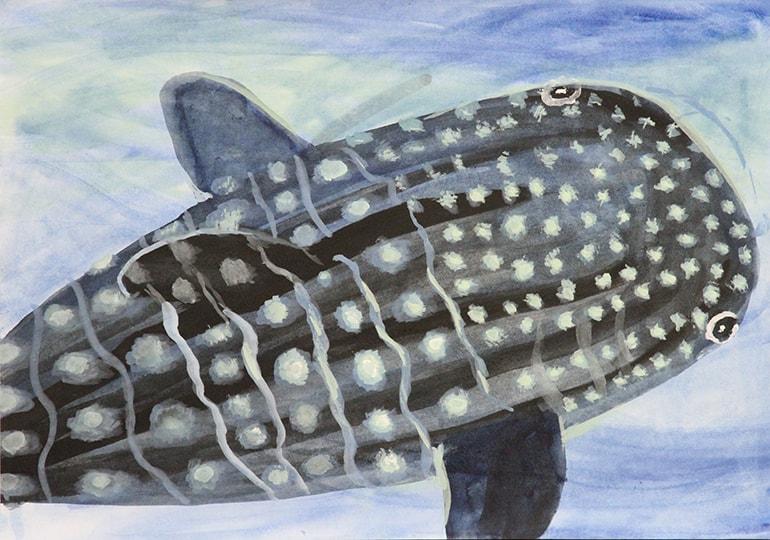 大きいジンベイザメ