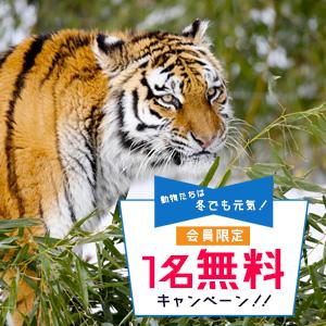 記事「会員限定《冬期》1名無料キャンペーン(12月1日から)」の画像