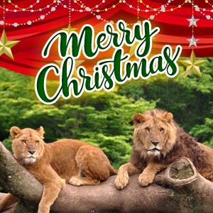 記事「クリスマスキャンペーン(12月25日まで)」の画像