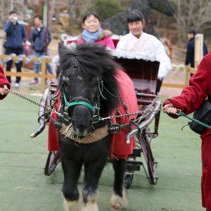 記事「冬限定!「馬ソリ」開催中」の画像