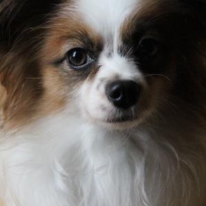記事「「イヌの館」休館のお知らせ」の画像
