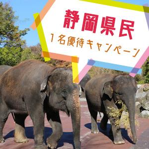 記事「静岡県民1名優待キャンペーン(2月23日・24日)」の画像
