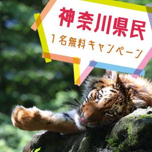 記事「神奈川県民1名無料キャンペーン(3月19日から)」の画像