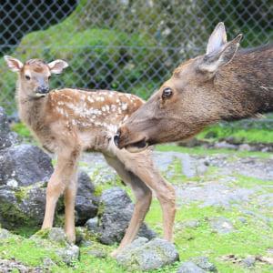 記事「ワピチの赤ちゃんが誕生!」の画像