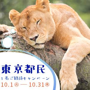 記事「東京都民1名ご招待キャンペーン(10月1日から)」の画像