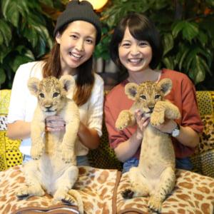 記事「【会員限定】ライオンの赤ちゃん・プレミアム撮影会!」の画像