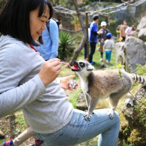 記事「【WEB予約制】限定ツアーで楽しく動物の生態を学ぼう!」の画像