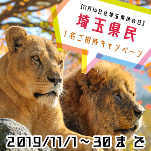 記事「埼玉県民 1名ご招待キャンペーン(11月1日から)」の画像