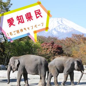 記事「愛知県民 1名ご招待キャンペーン(11月1日から)」の画像