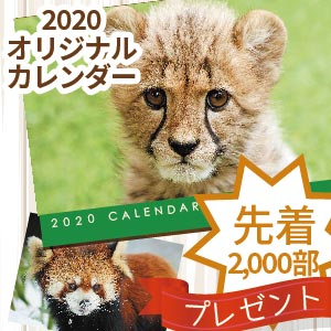 記事「【会員限定】カレンダー 来園プレゼント 11月9日(土)から開始!」の画像