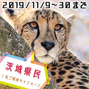 記事「茨城県民 1名ご招待キャンペーン(11月9日から)」の画像