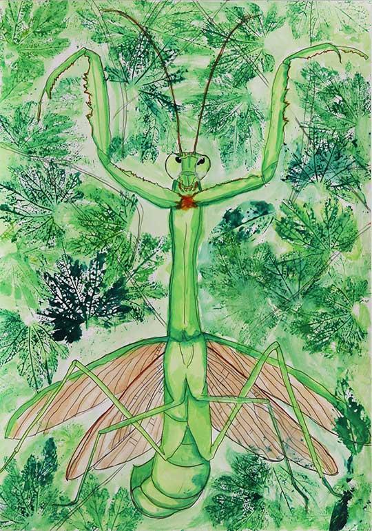 緑のカーテンの中のカマキリ