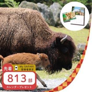 記事「MySAFARI登録者限定 2021年カレンダーお年玉プレゼント!! 1月1日より」の画像