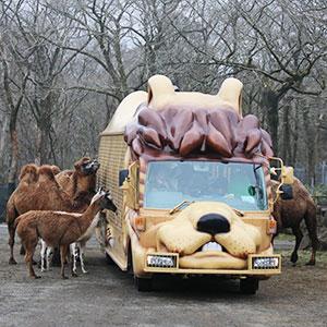 記事「ジャングルバス・プライベートツアー予約開始!」の画像