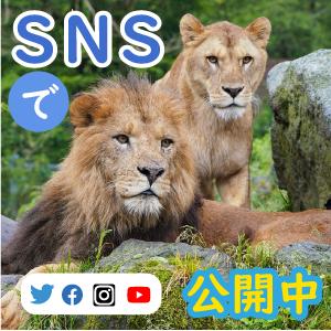 記事「公式SNSで「どうぶつ情報」を毎日、発信!フォローしてみよう!!」の画像