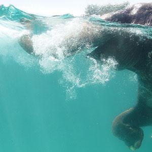 記事「「泳ぐゾウ」7月17日(土)スタート!」の画像